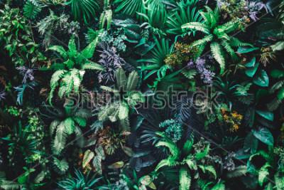 Fototapeta Piękny ogród z tropikalnym zielonym liściem