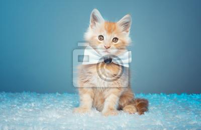Piękny Stylowy Kociak Z Czystej Krwi Maine Coon Portret Zwierząt