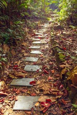 Fototapeta Piękny widok na schody do dżungli, Tajlandia