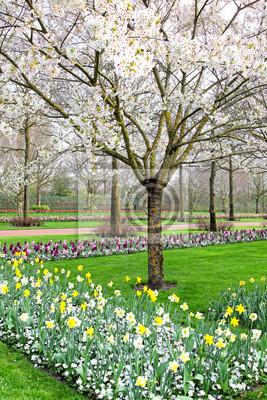 Piękny wiosna ogród z czereśniowym drzewem