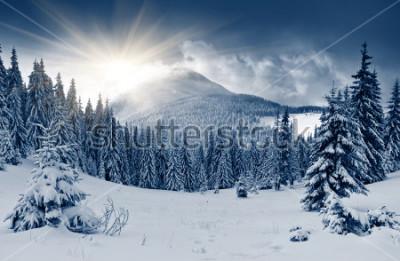 Fototapeta Piękny zima krajobraz z śniegi zakrywającymi stronę