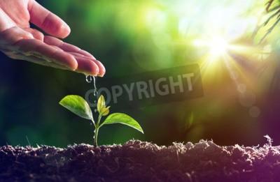 Fototapeta Pielęgnacja nowego życia - Podlewanie młodych roślin