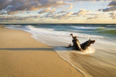 Fototapeta Pien wyrzucony na Morska plaze