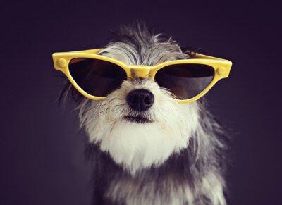 Fototapeta Pies w okulary 2