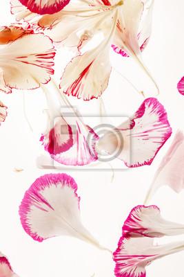Fototapeta płatki kwiatów
