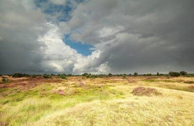Fototapeta Pochmurne niebo nad dziką łąką