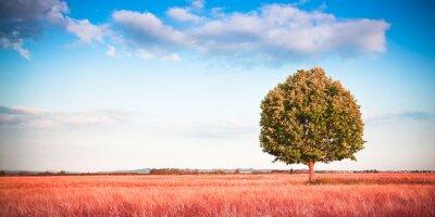 Fototapeta Pojedyncze drzewa w Toskanii Pole pszenicy - (Toskania - Włochy) - Kontrasty obrazu z miejsca kopiowania
