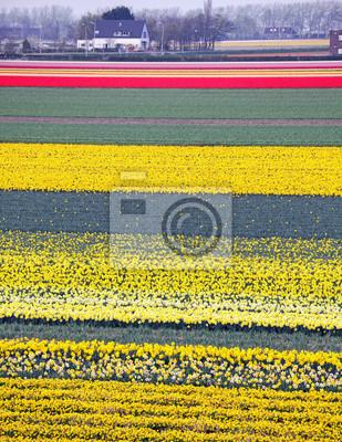 Pole kwitnących kwiatów