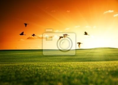 pole trawy i ptaki latające