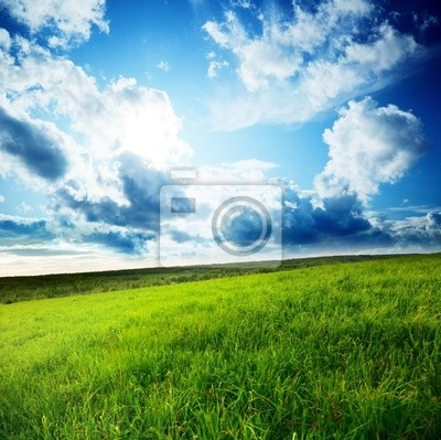 pole trawy wiosną i słońcem