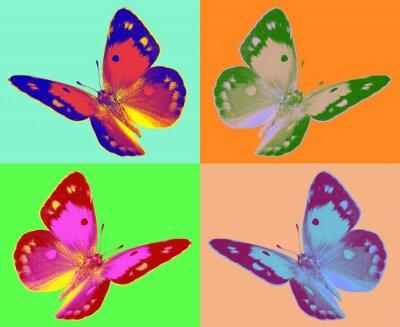 Fototapeta pop Colias motyl