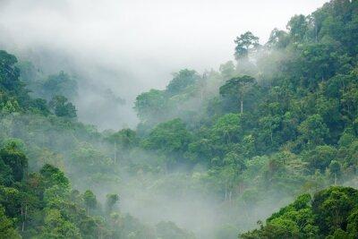 Fototapeta Poranna mgła rainforest