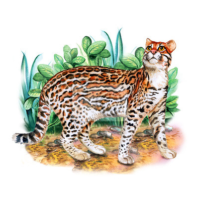Portret Akwarela Z Ocelot Kot Z Kropek Paski Samodzielnie Na