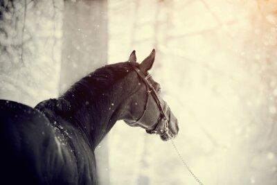 Fototapeta Portret konia sportowego