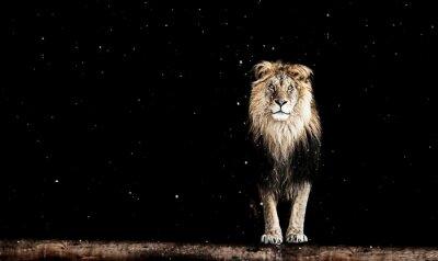 Fototapeta Portret pięknej lwa, geometryczny wzór
