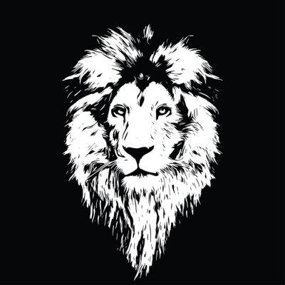 Fototapeta Portret pięknej lwa, lwa w ciemności