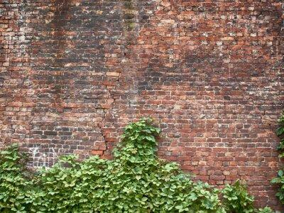 Fototapeta pozostawia na ceglany mur na tapecie