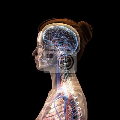 montaż nerwów brak spontanicznego erekcji