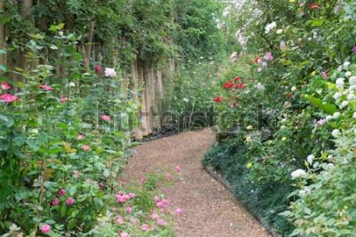 Fototapeta Przejście w botanicznym ogródzie różanym, akcyjna fotografia