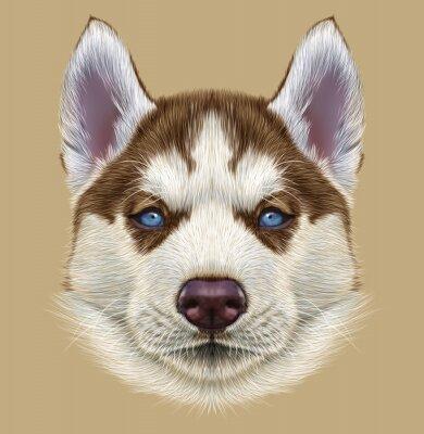 Fototapeta Przykładami Portret Husky Puppy. Śliczny portret młodych miedzianego koloru czerwonego bi-pies z jasnoniebieskich oczach.