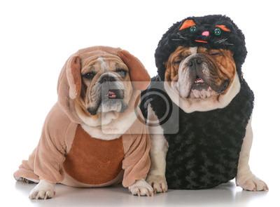 Psy Ubrane Jak Kot I Pies Fototapeta Fototapety Buldog 2