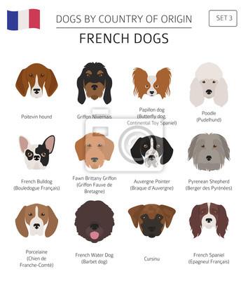 Bardzo dobra Psy według kraju pochodzenia. francuskie rasy psów. plansza GT37