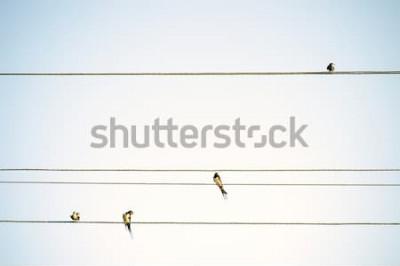 Fototapeta Ptaki cyce siedzi na drutach minimalistyczne tło wiosna