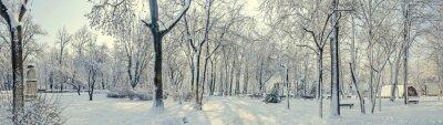 Fototapeta Publiczny z Europy z drzew i gałęzie pokryte śniegiem i lodem, ławeczki, słup światła, krajobraz.