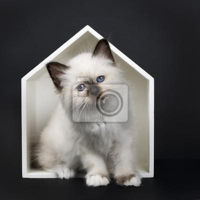 Punkt Pieczęć święty Kot Birmański Siedzi W Białym Drewniany