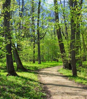 Fototapeta Pusta ścieżka w parku wiosną