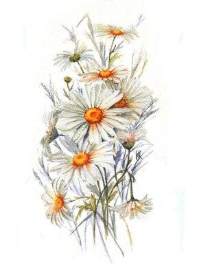 Fototapeta Ręcznie rysowane Akwarele przetargu lato kwiat. stokrotki artystyczne kwiaty. Dziki rysunek rumianek. Ilustracja Naturalne dekoracyjnego wzoru na białym tle.