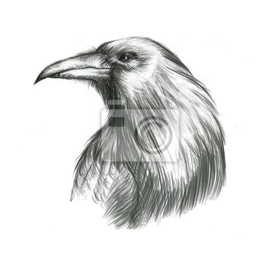 Fototapeta Ręcznie Rysowane Grafiki Liniowe Kruk W Stylu Grafiki Tatuaż