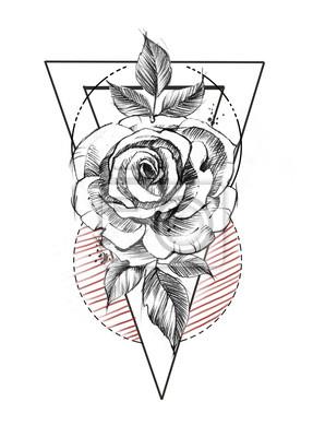 Fototapeta Ręcznie Rysowane Grafiki Liniowej Róż W Stylu Grafiki Szkic