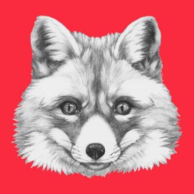 Fototapeta Ręcznie rysowany portret Fox w okularach. Vector pojedyncze elementy.