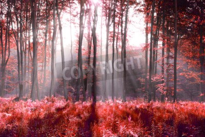 Fototapeta Red abstrakcji lasu