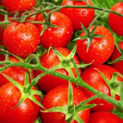 Fototapeta red tomatoes