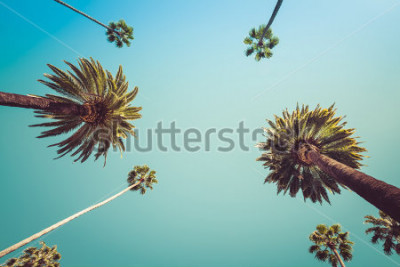 Fototapeta Redeo Los Angeles Vintge Vintage Palm Trees - jasne letnie niebo