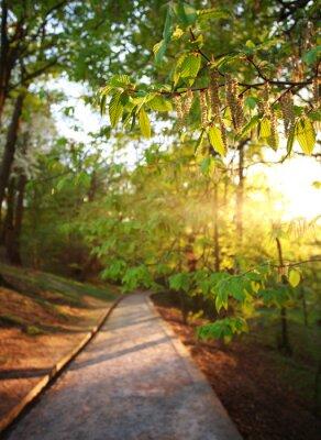Fototapeta Road in green city park, lighted the rays of sunset