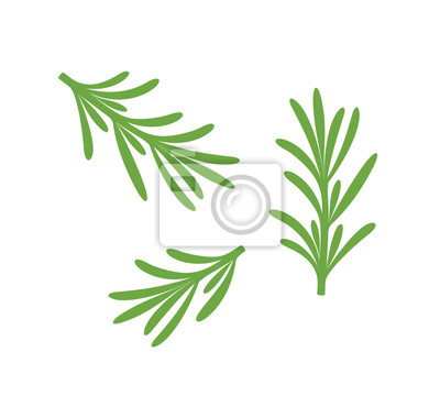 Fototapeta Rosemary branch. Isolated rosemary on white background