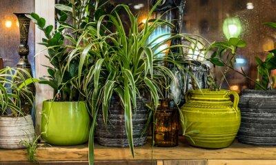 Fototapeta rośliny domowe