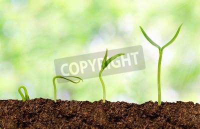 Fototapeta Rośliny rosnące z ziemi - Plant Progress