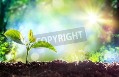 Fototapeta Rosnące Sprout - początek nowego życia