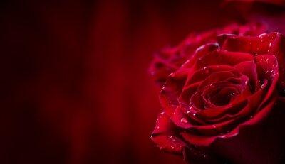 Fototapeta Róża. Czerwone róże. Bukiet czerwonych róż. Walentynki, wesele dzień tła. Płatków róży i serca Valentine pudełka. Valentines i granicy ślubu. Woda spada na płatków róż.