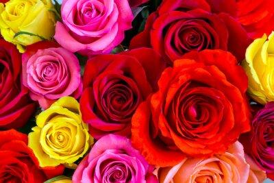Fototapeta Róże w tle