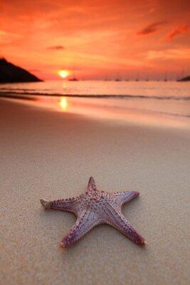 Fototapeta Rozgwiazda na plaży