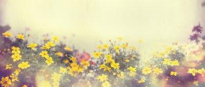 Fototapeta Różne kolorowe wiosenne kwiaty w słońcu, rozmycie, transparent na stronie internetowej, granicznym