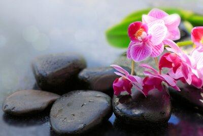 Fototapeta Różowe orchidee i czarne kamienie.