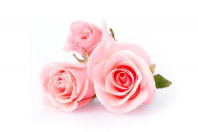 Fototapeta różowy kwiat róży na białym tle