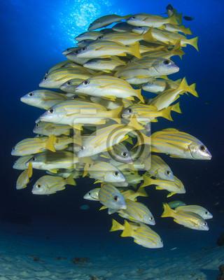 W morzu jest więcej ryb