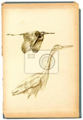 Rysunek Szkic Ołówkiem Ptak Czaple Fototapeta Fototapety Szkic